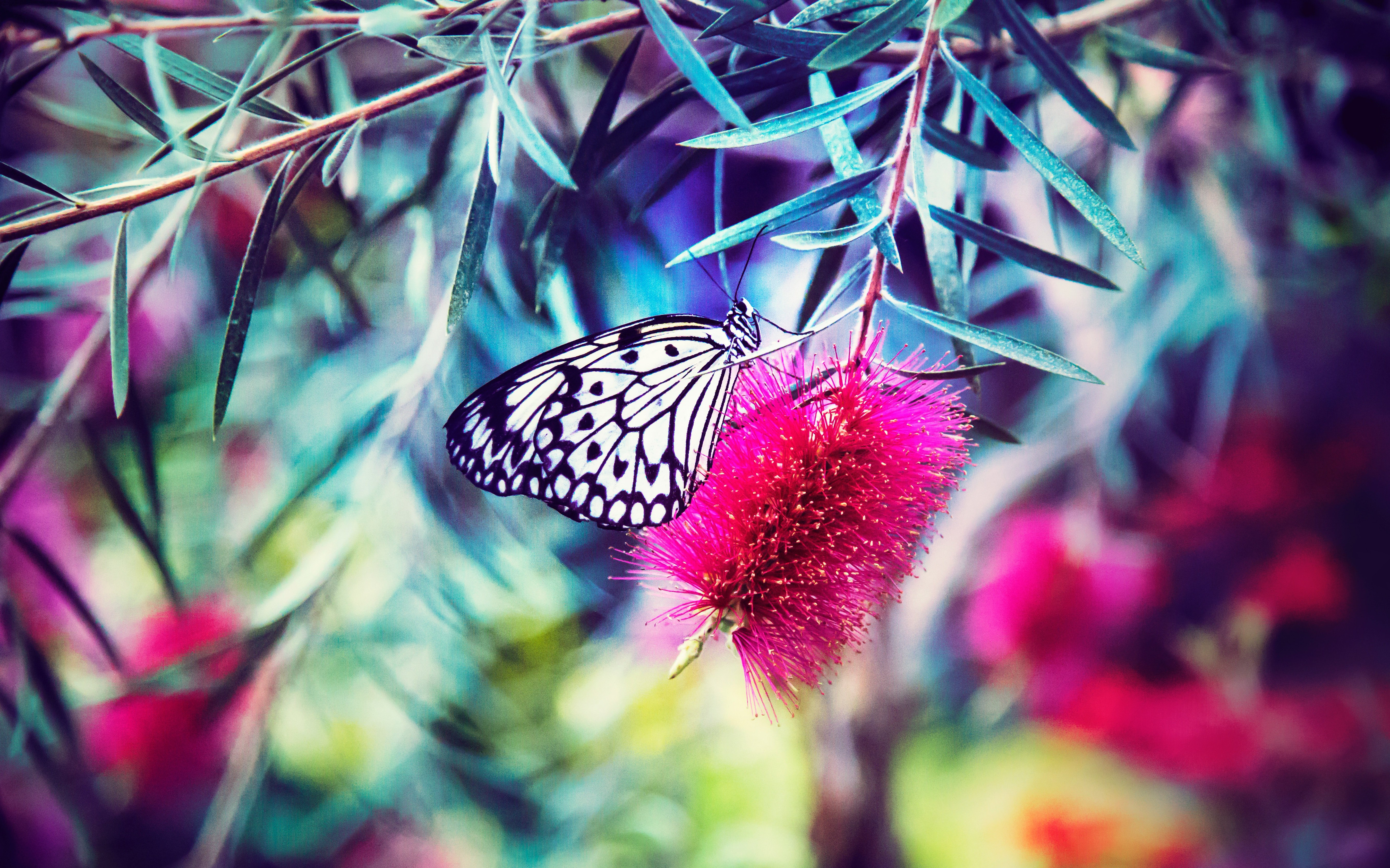 butterfly-blossom-courage-motivation