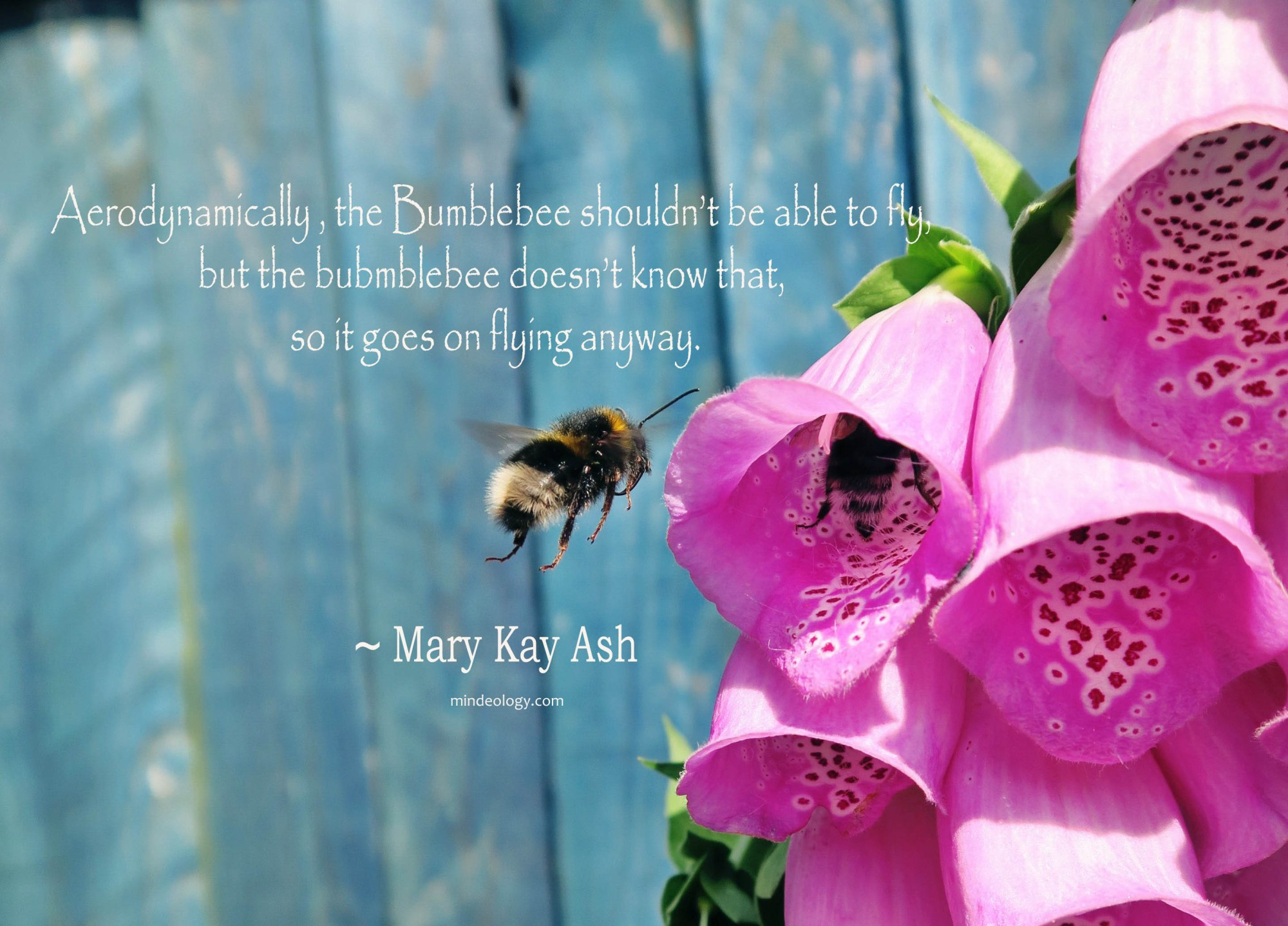bumblebee, motivation, inspirtaion