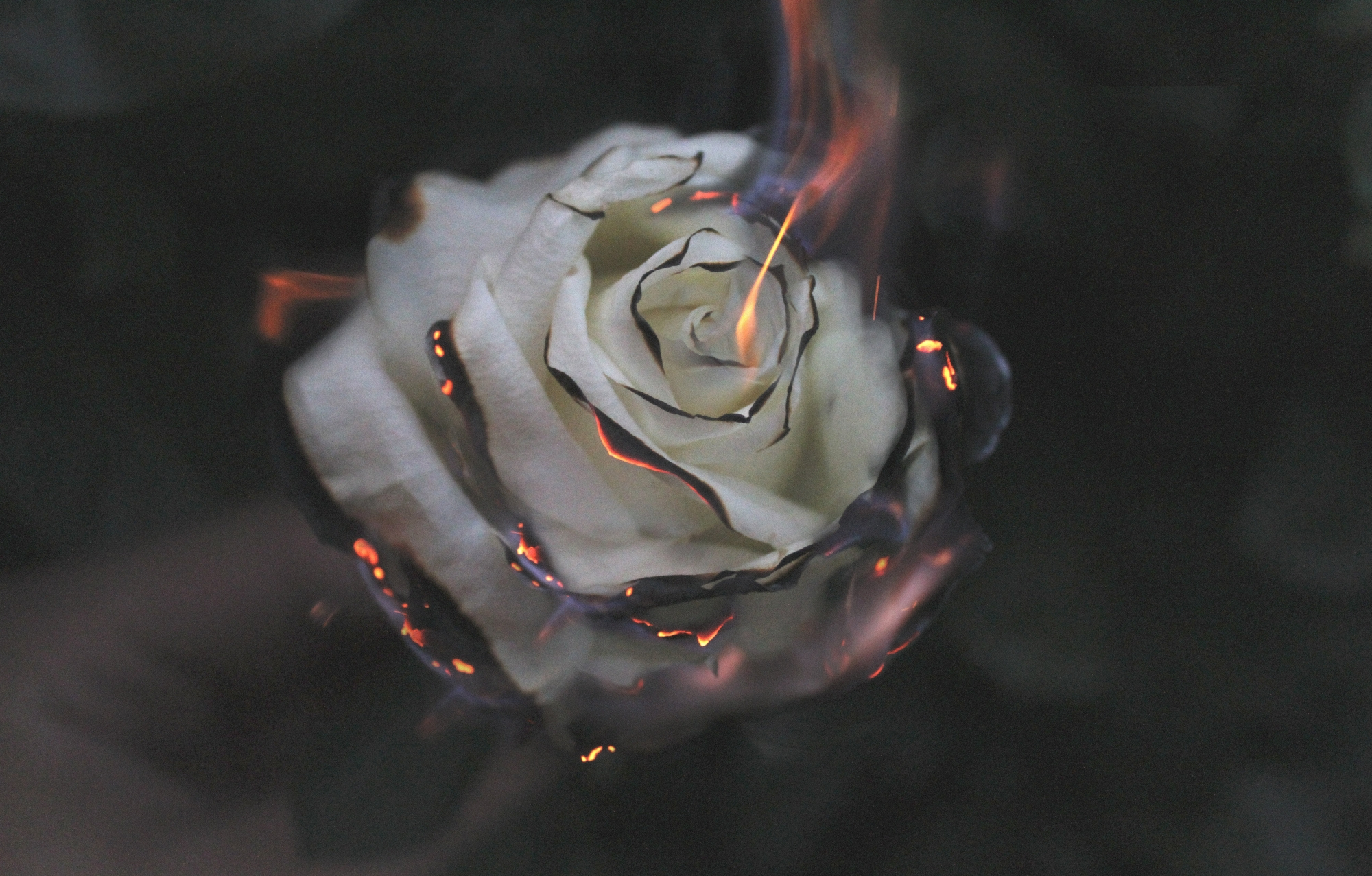 burning white rose- forget and forgive- ways to forgiveness