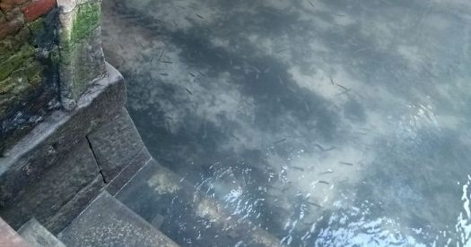 fish-seen-in-clear-venice-canals-after-coronavirus-lockdown-fb4-png__700
